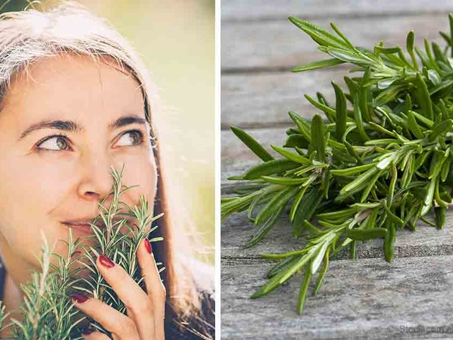 Brain-Boosting Rosemary Is Easily Cultivated in Your Backyard