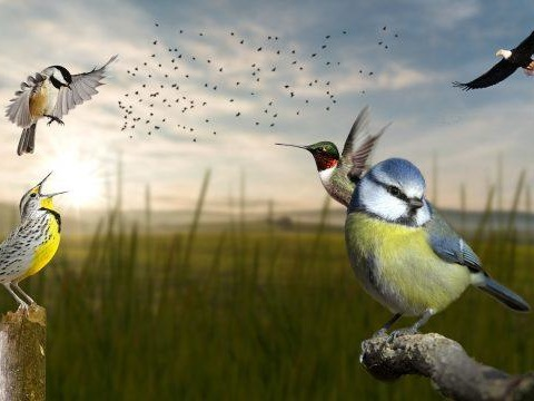 North America's Bird Population Is Collapsing – Nearly 3 Billion Wiped Out Since 1970
