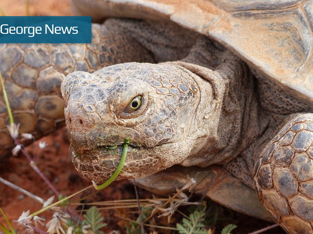 Of transportation and tortoises: Stewart's northern corridor bill heard in congressional committee