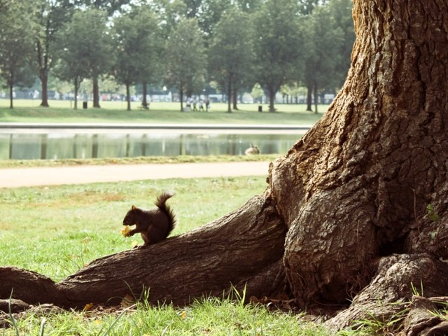 A Salute to DC's Squirrels