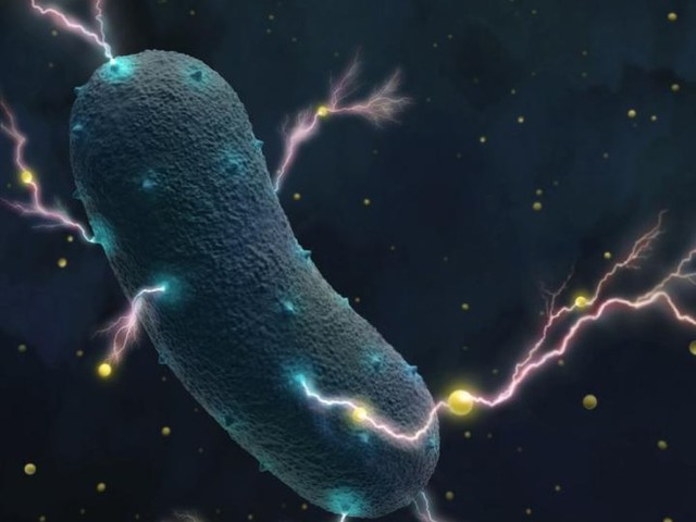The Bacteria in Your Gut Produces Electricity