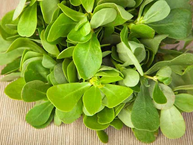 Purslane: The Weed With Wholesome Health Benefits