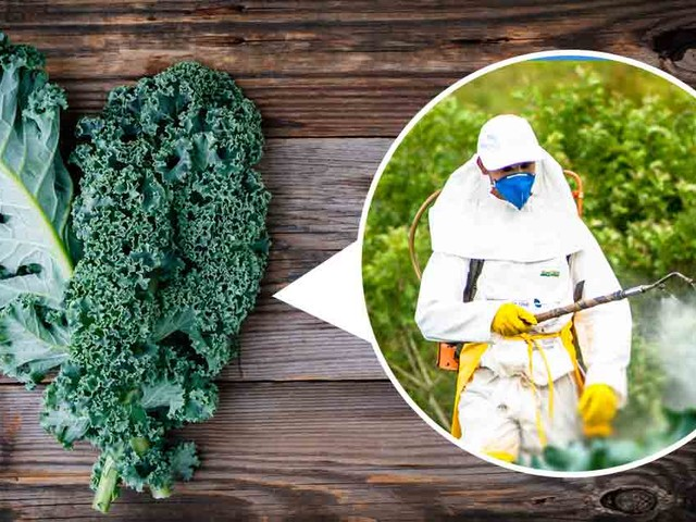 Why Kale May Not Always Be a Superfood