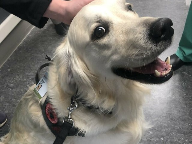Meet The Hospital Employee Tasked To Say Hi To Everyone