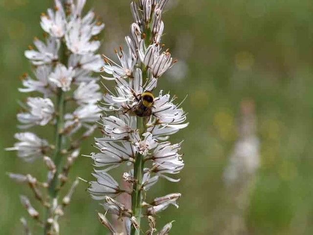 Spikenard may boost memory and cognitive function