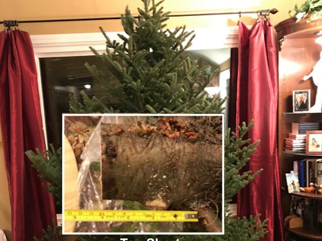 Christmas Tree Emergency
