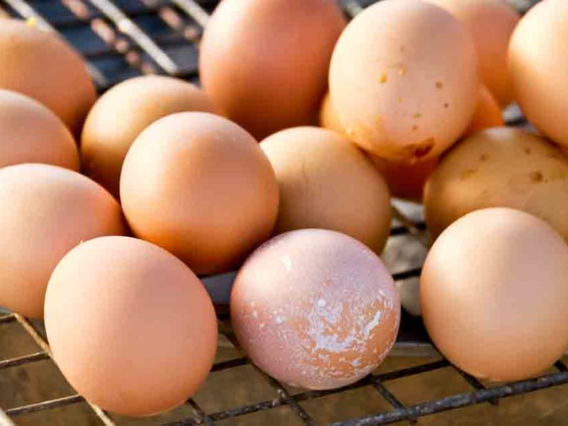 Have you tried grilling eggs for essential choline?