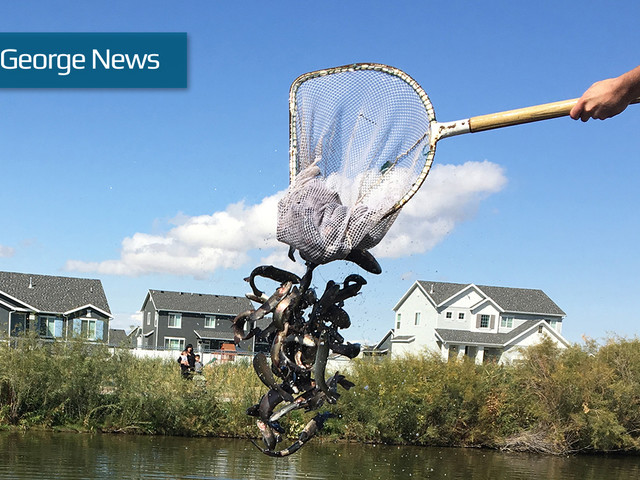 DWR stocks over 10 million fish throughout Utah to increase fishing opportunities in 2019
