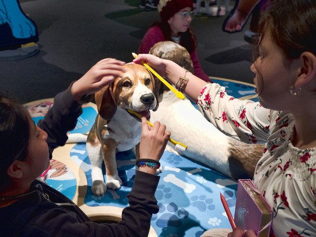 California science exhibit explains the dog-human friendship