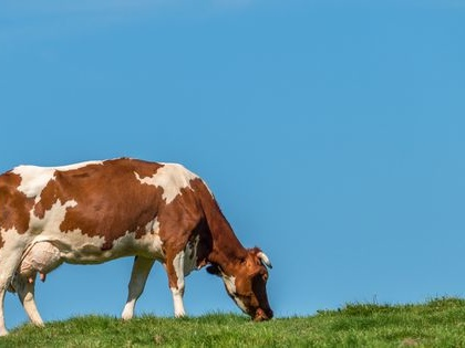 Why you should care about the grass cows eat