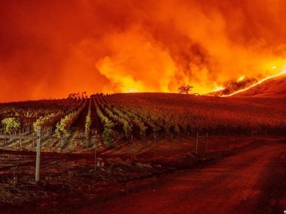 California Fires Spark Massive Mandatory Evacuations; Wineries Burn As Winds Hit 93 MPH