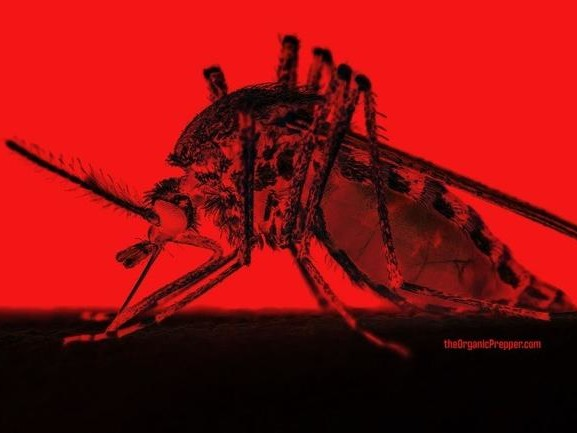 """Michigan Officials Warn Of Another """"Scary"""" Virus That People Should Worry About"""