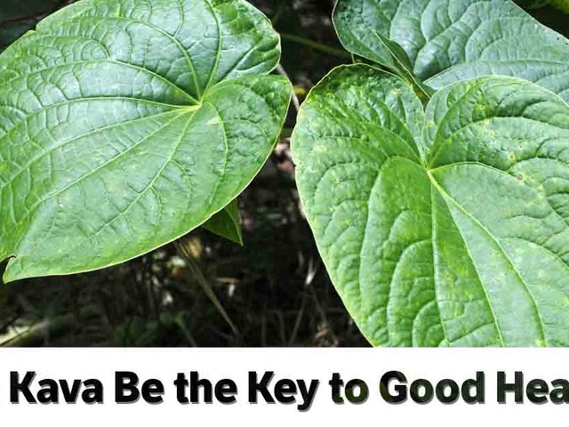 Captivate Your Senses With Kava