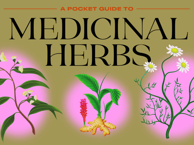 Herbal Tea Drinkers: Here's Your Pocket Guide To Traditional Medicinal Herbs