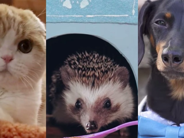 From Jiff Pom to Lil Bub, these are the 23 most popular pet influencers