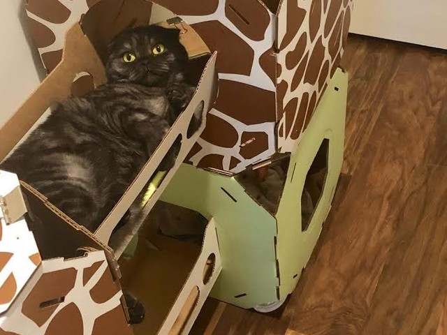 A $60 cardboard cat condo is one of the best purchases I've made as a cat owner