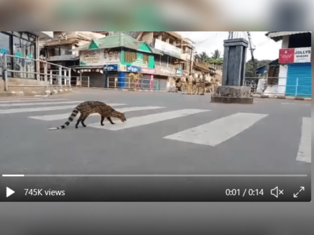 Was a Rare Malabar Civet Spotted During COVID-19 Lockdown?