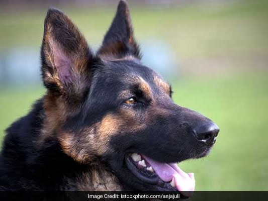 CRPF Dogs To Be Equipped With Special ''Police Dog Cameras''