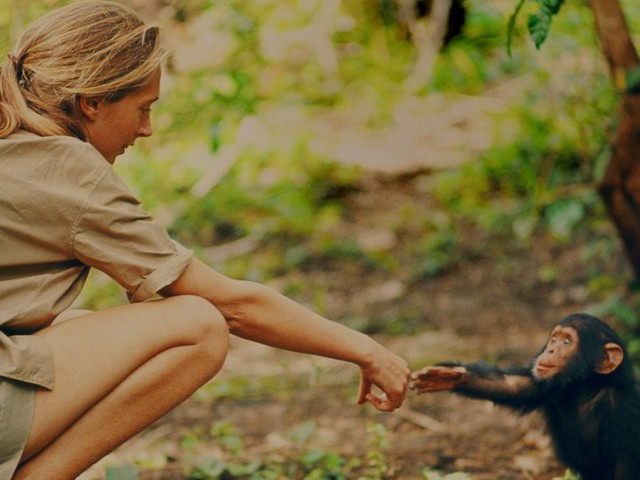 Review: 'Jane' Is an Absorbing Trip Into the Wild With Jane Goodall