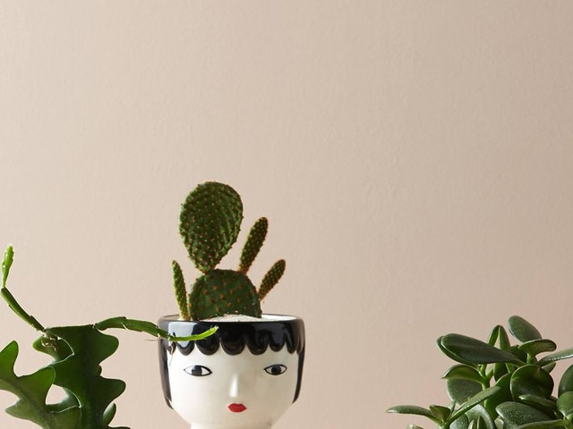 A Plant Queen's Guide To Green Gifts That Don't Succulent