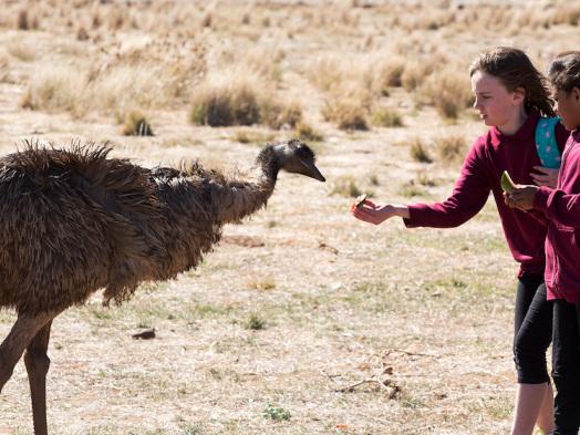 Sydney Film Review: 'Emu Runner'