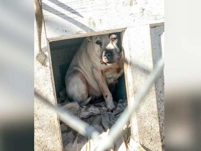 Dog Left Hiding In Doghouse After Family Decides To Move Without Her