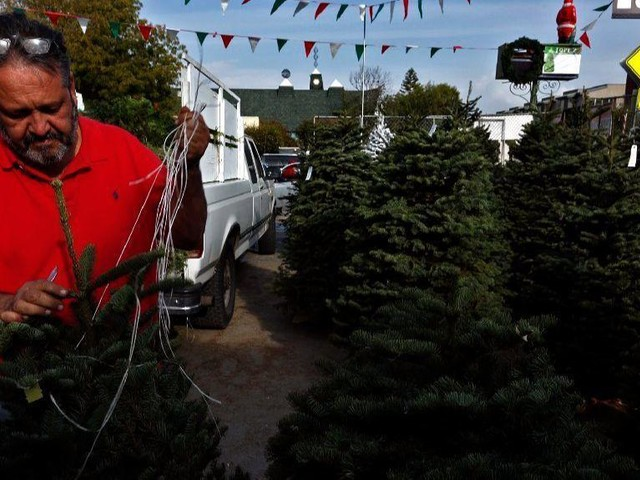 Why your Christmas tree costs more — again