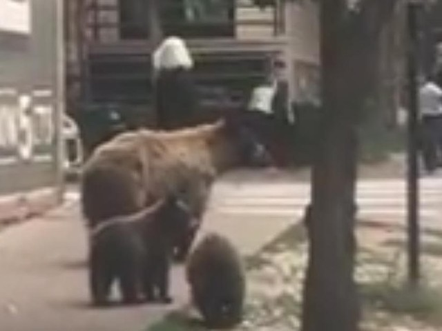 Don't take selfies with bears, Aspen police warn