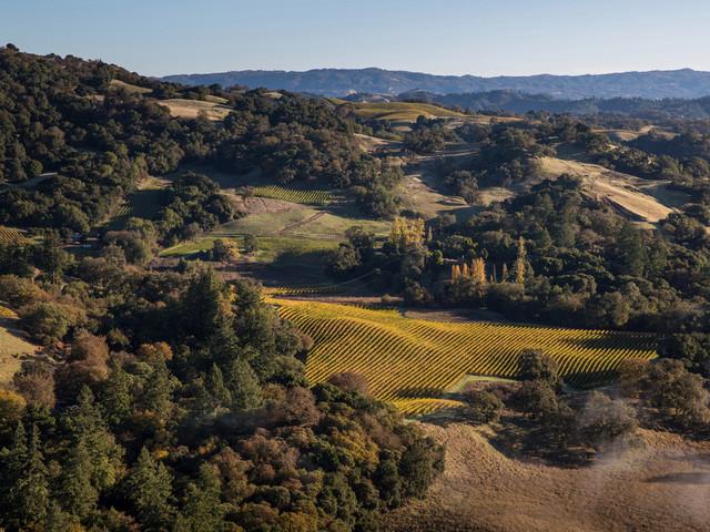 97,000-gallon red wine leak floods Sonoma County vineyard