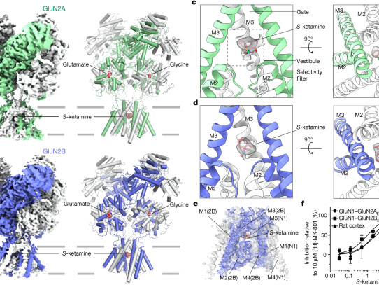 Structural basis of ketamine action on human NMDA receptors