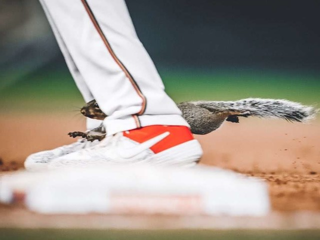 Curious Squirrel Interrupts Baseball Game And Runs Right Through Pitcher's Legs