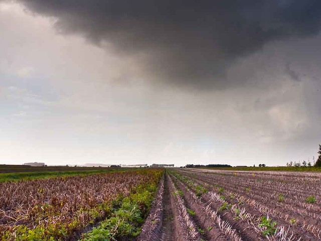Cover Crops May Be a Growing Problem for Clean Water