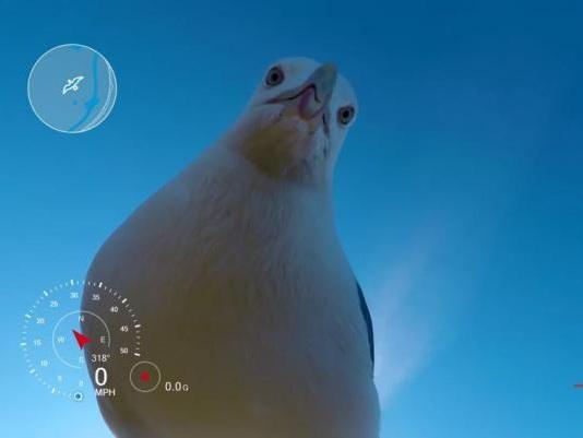 Norwegian man finds camera five months after seagull theft