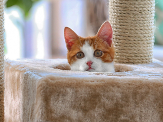 The Best Cat Trees for Your Feline Friend