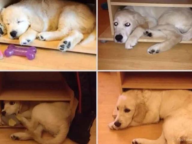 Bellas Fotografías de Mascotas Antes y Después
