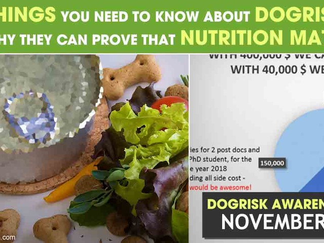 Help Us Prove the Right Nutrition Can Prevent and Heal Disease in Dogs