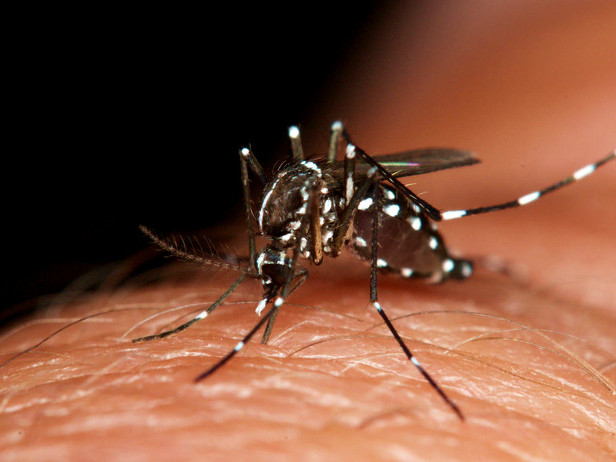 Mosquito Control: How To Protect Your Horses & Other Livestock