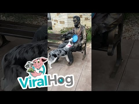 Dog Tries To Play Frisbee With An Abraham Lincoln Statue
