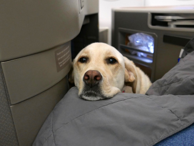 The End of Emotional-Support Animals? Every Major Airline's Policy