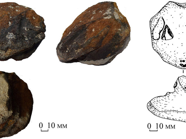 8,300-Year-Old Stone Snake Heads Reveal Stone Age Ritual Ceremonies
