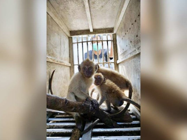 Someone Dyed These Baby Monkeys Blonde To Make Them More 'Attractive'