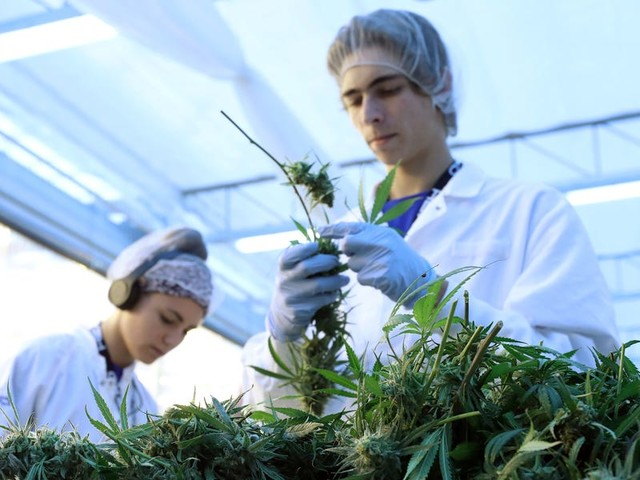 The cannabis industry is set to employ 400,000 people in the US by 2021 — here's how much key jobs in the industry pay, from budtender to cultivation director