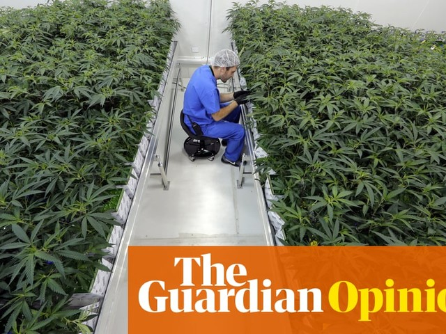 The continuing UK ban on cannabis-based painkillers is absurd and inhumane | Simon Jenkins