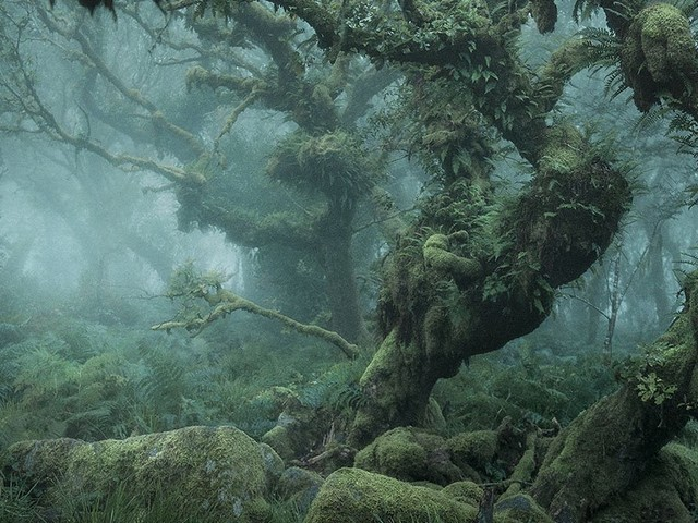 Photos of the Tangled Mossy Trees in a Foggy English Wood