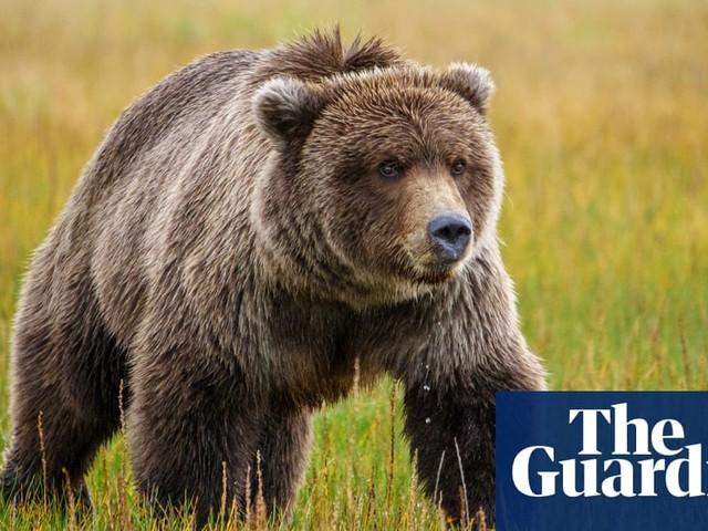 Cyclist fends off 500lb bear after getting bitten in Alaska