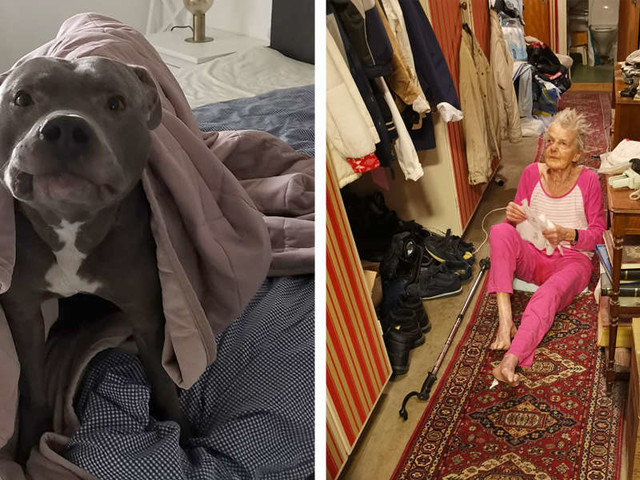 Woman Was Scared Of Neighbor's Pit Bull — Until He Saved Her Life