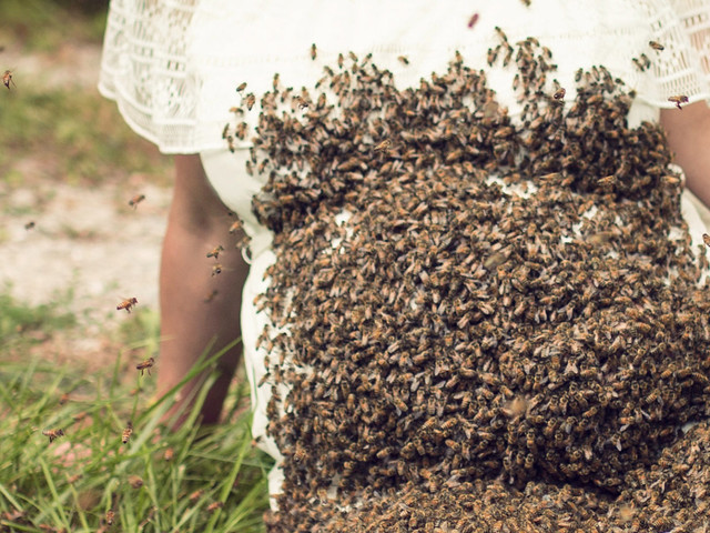 Pregnant Mum Covers Baby Bump In 20,000 Bees For Maternity Photoshoot