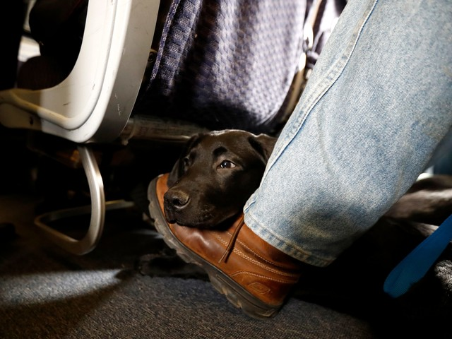 Airlines could refuse emotional support animals under proposed rule