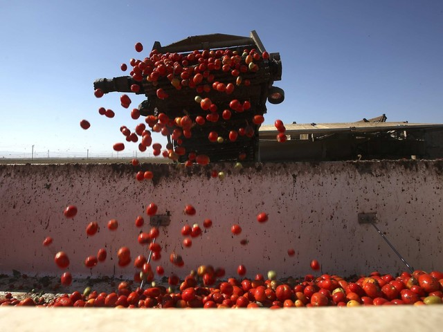 How a group of Florida tomato growers could help derail NAFTA
