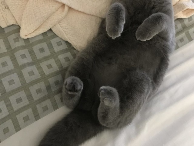 Comment on Happy #TRT – Tummy Rub Tuesday (Week 295) by meowmeowmans